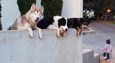 כלבים עוקבים אחרי הנעשה ברחוב