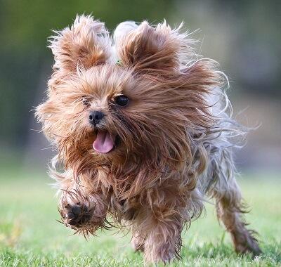 כלב עם המון שיער, טיפול בפרווה של כלבים