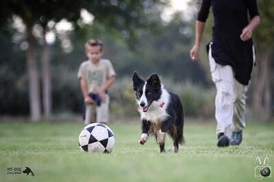 טיול משחק בפארק עם כלב