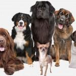 תמונה של כלבים שמחים, אודות מאי דוג מרכז לימודי אילוף כלבים