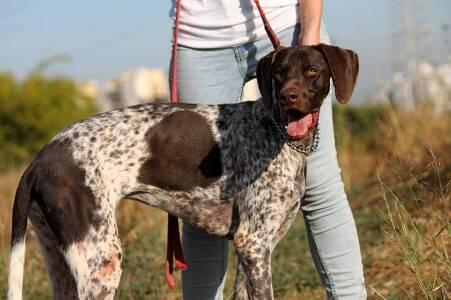 התנדבות להצלת כלבים