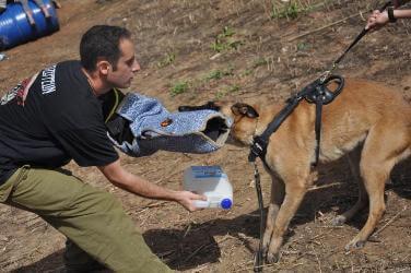 כלבי עבודה הם כלבי שמירה, כלבי ביטחון ועוד