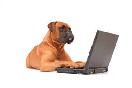 אישור הרשמה - כלבנות טיפולית