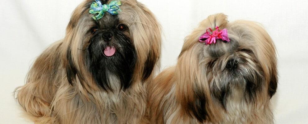קורס טיפוח כלבים, קורס ספרות כלבים, מספרה לכלבים