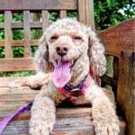 כלב מטופח ומסופר מרגיש טוב ונעים יותר