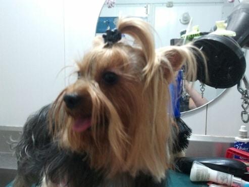 ספר כלבים, מקצוע מבוקש, לפתוח עסק עצמאי בקלות