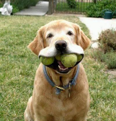 כלב עזר יכול להביא חפצים שונים