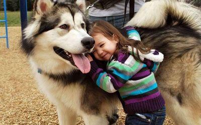 השתלמות מטפלים לטיפול בעזרת כלבים