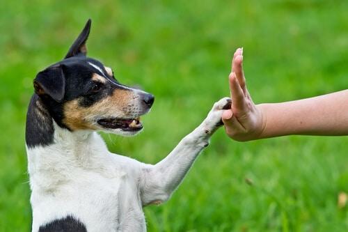 מאי דוג עוזרים לאנשים, בעזרת כלבים טיפוליים