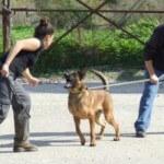 קורס כלבי עבודה, כלבי הגנה
