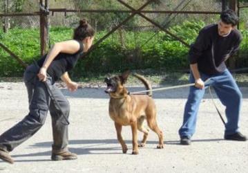 כלבי שמירה, כלבי אבטחה, הגנה, כלבי עבודה