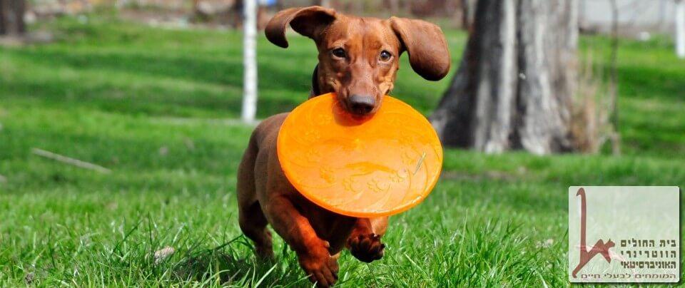 מאמרים וכתבות בנושאי כלבנות ואילוף כלבים