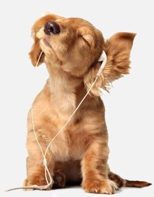 כלב חמוד מאזין למוסיקה