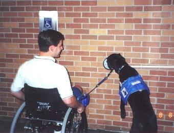 כלב עזר אומן לבצע פעולות מורכבות ביותר