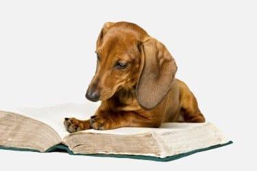 כלב קורא ספר ולומד בקורס