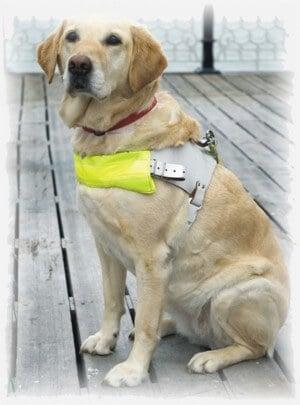 כלב העזר משתלב בכל תחומי החיים של האדם המוגבל