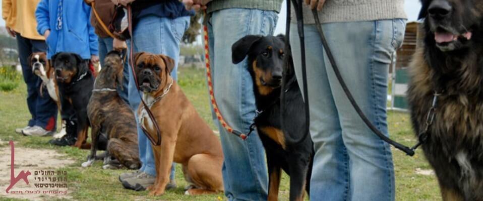 כלבים בשיעור אילוף השתלמות כלבי עבודה, כלבי סיוע שמירה אבטחה