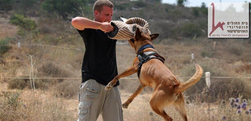כלב עבודה כלב הגנה ושמירה באימון