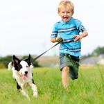 מטרת האילוף לאפשר לכלב להשתלב היטב במשפחה