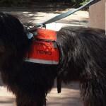 כלב עוזר לבני אדם בביצוע מטלות יום יום