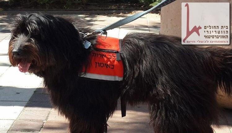 כלב עוזר לבני אדם בהבאת דברים