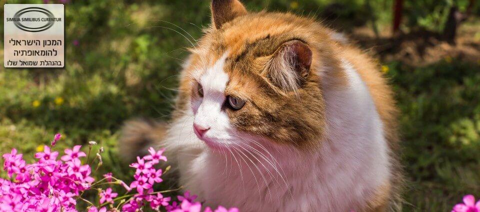 לימודי רפואה משלימה לחתולים וכלבים מטפלת באלרגיות ובעיות חוזרות