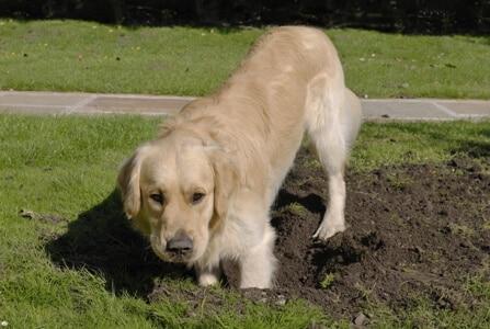 הומאופתיה לאילוף כלב בעיות התנהגות