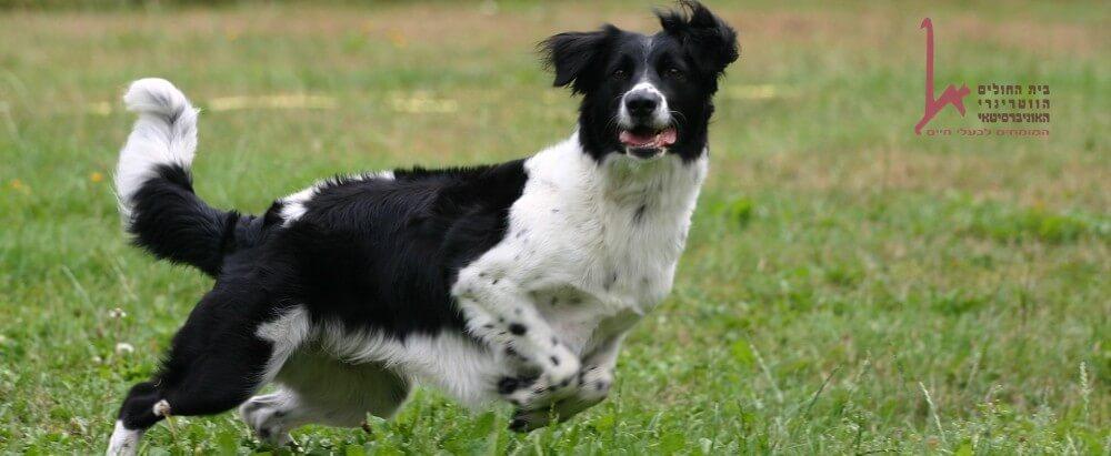 כלב בית משחק עם המאלף שלו