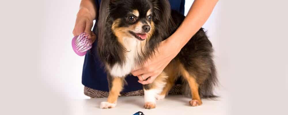 ספרות כלבים טיפוח גזעים שונים