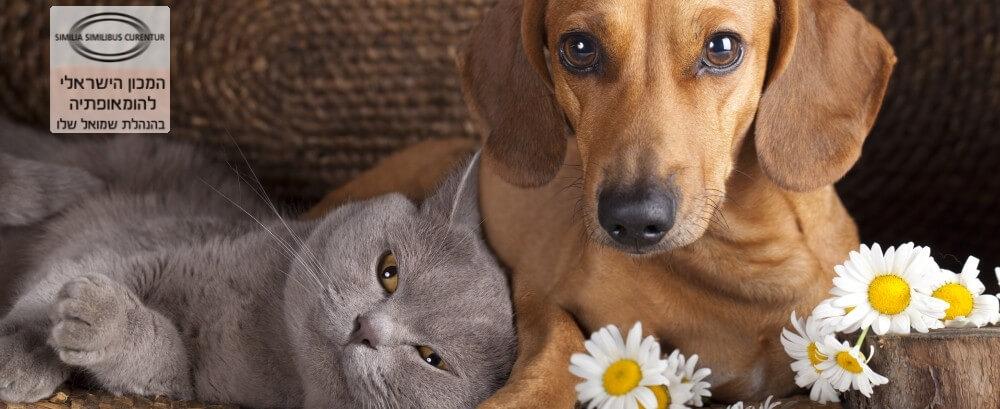 רופאה אלטרנטיבית לכלב וחתול בריא