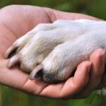 לחיצת יד של אדם וכלב, כלבנות טיפולית