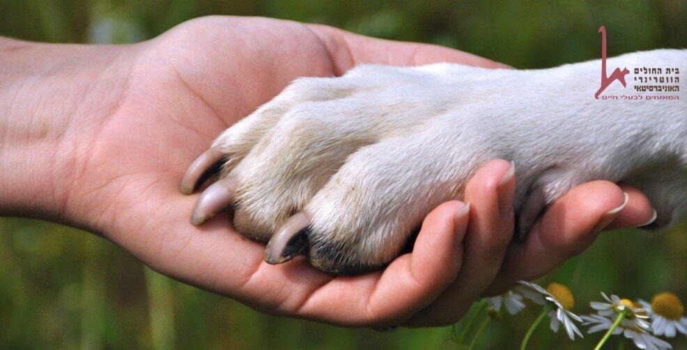 כלב הוא ידיד ומטפל הטוב ביותר של האדם