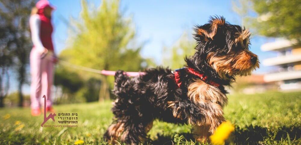 כלבנות טיפולית היא שיטה לטפל בבני אדם עם כלבים