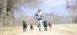 קבוצת כלבים רצים ביחד עם המאמן בשיעור אילוף כלבים
