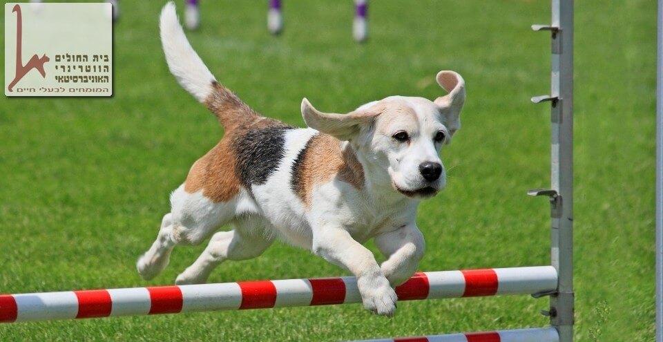 כלב קופץ על משוכה, קורס אילוף כלבים- קורס עם תוכן והנאה