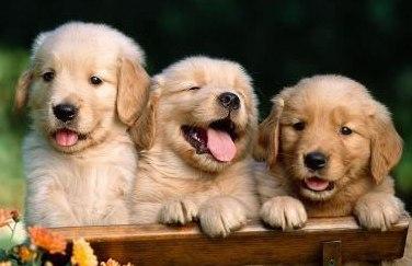 הכלב מאמץ תכונות אנושיות כדי לשמש חיית מחמד מעולה