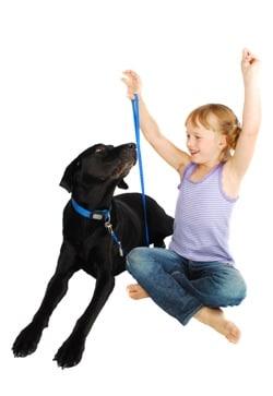 לימודי אילוף כלבים מקצוע מאתגר ומספק