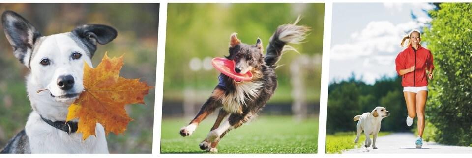 תמונה מבצע חבר מביא חבר אילוף כלבים קורסים כלבנות