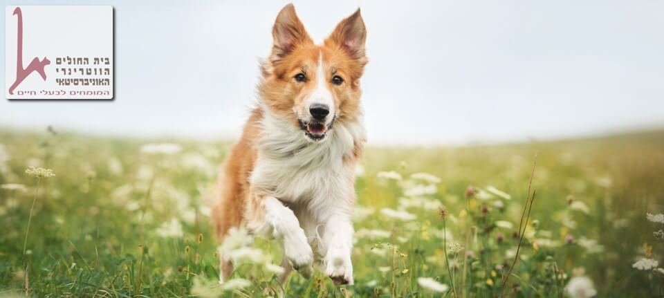 סדנת גישוש טיפולי עם כלבים למטפלים, כלי עבודה חשוב