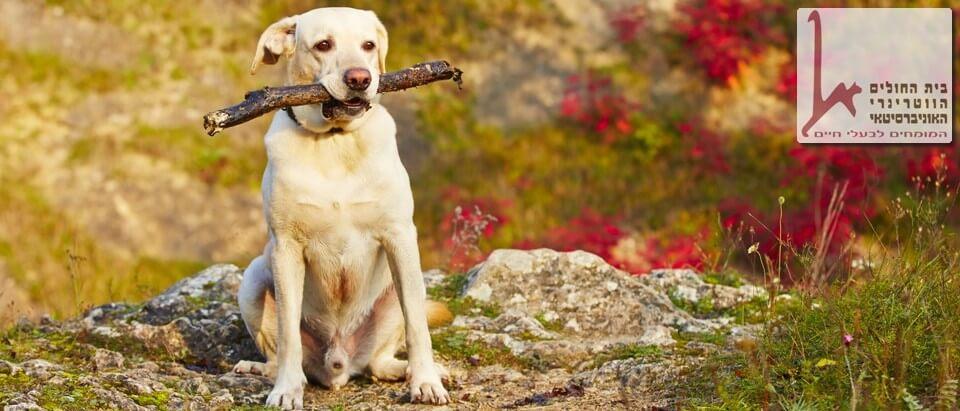 הכלב בטבע סיוע טיפולי לסדנאות העצמה