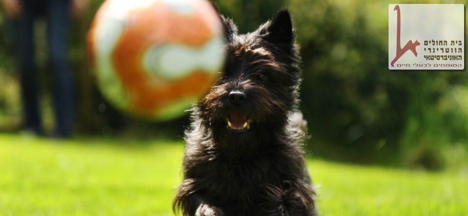 כלב עוסק בספורט כלבני, סדנת אג'יליטי