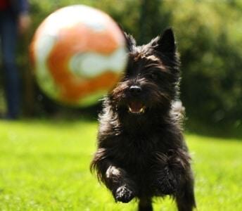 מחקר על משחקי כלבים של בית הספר למאלפי כלבים מאי דוג