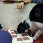 סדנת משחקים לכלבים, מאי דוג לימודי אילוף כלבים
