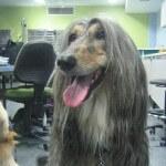 בית ספר לספרות כלבים, מתאמנים על סוגי כלבים רבים ושונים כדי לצבור נסיון מקצועי במספרה לכלבים
