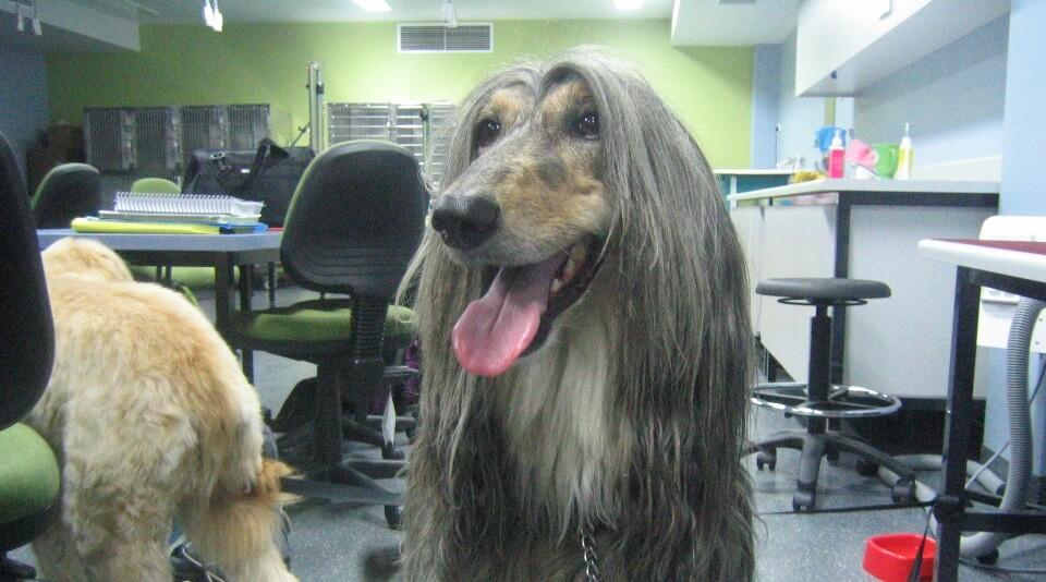 בית הספר לספרות כלבים מתאמנים על סוגי כלבים רבים ושונים כדי לצבור נסיון לקריירה שלספרי כלבים