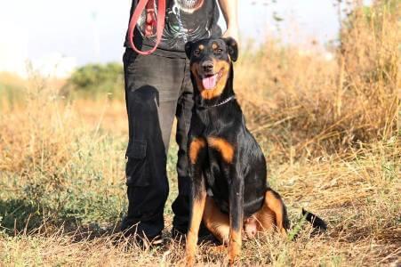 כלבנות טיפולית מול עבודה עם בעלי חיים עבודה טיפולית מספקת ומאתגרת