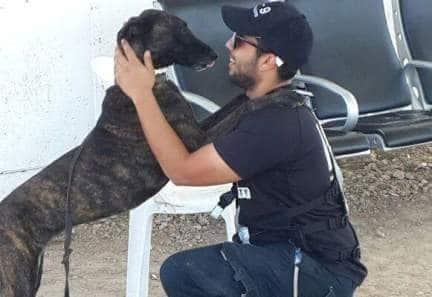 קורס מאלפי כלבים לומדים במאי דוג אצל המדריכים הטובים ביותר. גם כלבנות טיפולית, אילוף כלבי עבודה