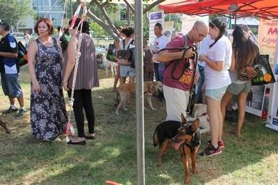 יום אימוץ כלבים, פעילות מאי דוג, אילוף, כלבנות טיפולית.