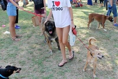 אנחנו אוהבים כלבים ורוצים לעבוד עם כלבים