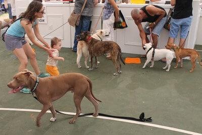 ילדים וכלבים משחקים ביחד